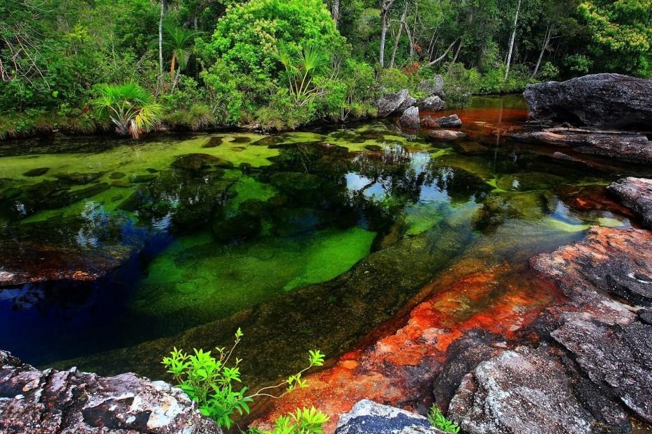 Dünyanın en güzel nehri: Caño Cristales