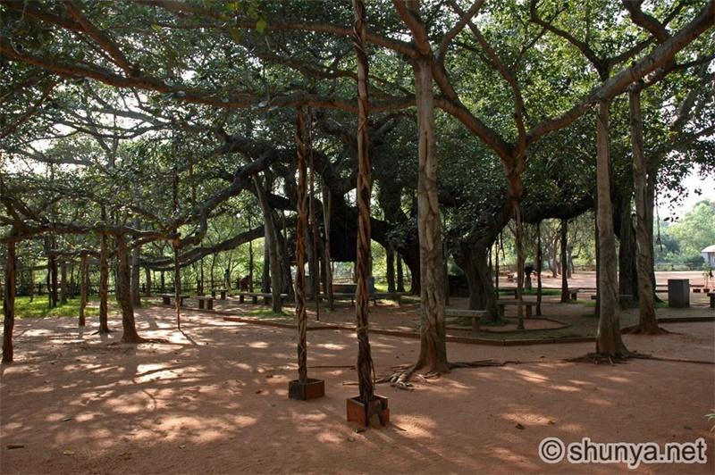 Auroville4