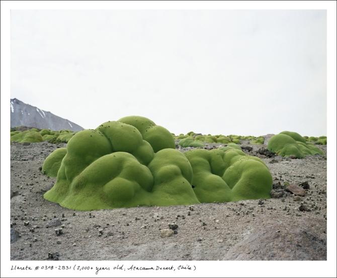 Dünyamızın-en-eski-canlıları6