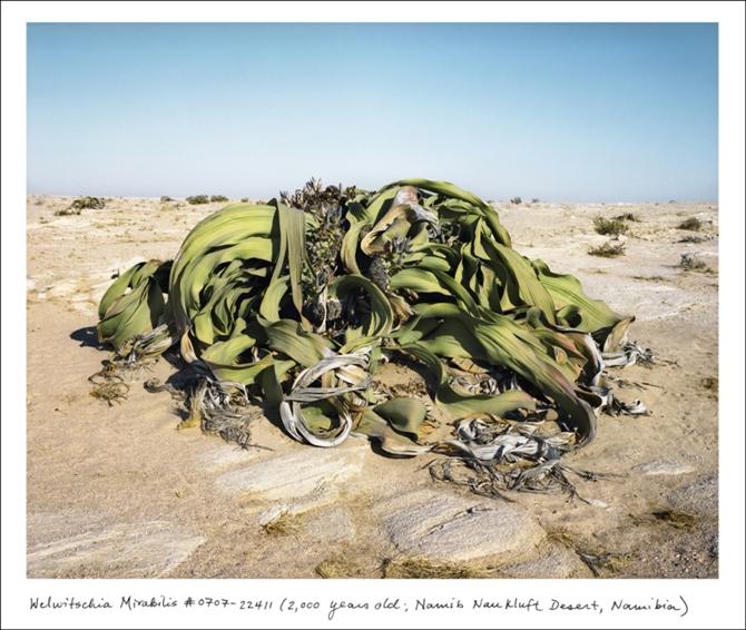 Dünyamızın-en-eski-canlıları7