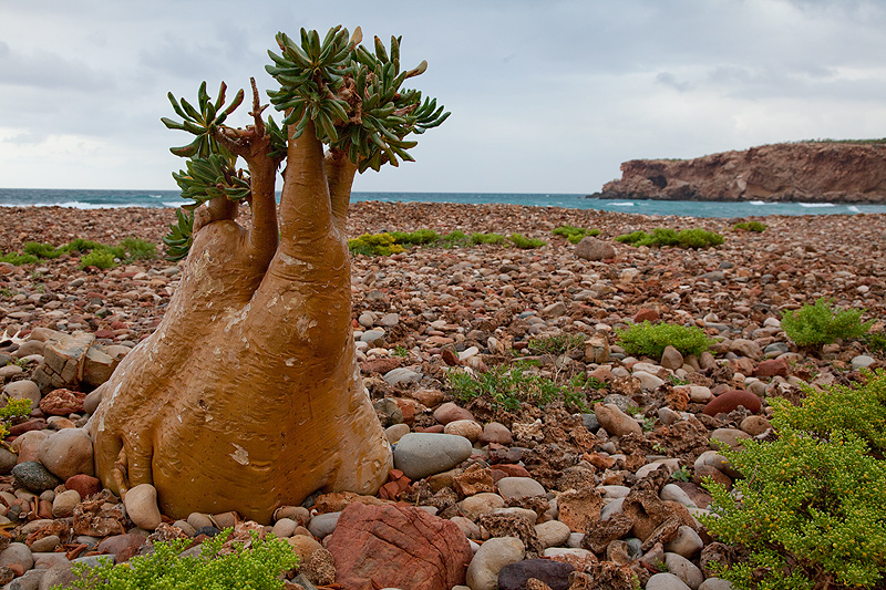 Sokotra-Island_Yemen_7O6_DX-News