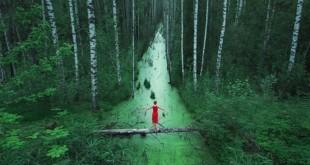 Sonsuz Orman