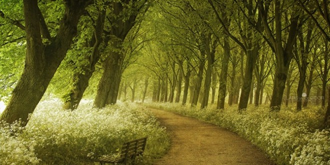 Springtime-Path-In-Holland
