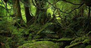 ağaçlar_veri_yedekleme