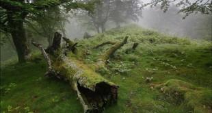 ağacın_ölümü