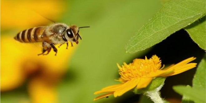arılar_neler_yapar2.jpg
