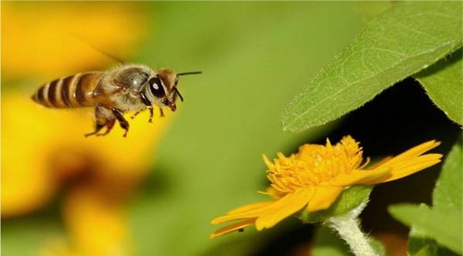 arılar_neler_yapar2