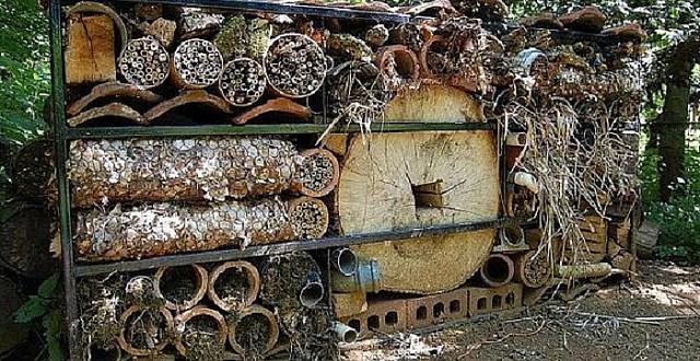 böcekleriçinmimarlık (2).JPG