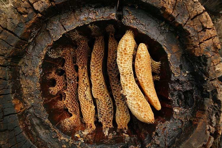 2015 Yılında Türkiye'den En Önemli 10 Arkeolojik Keşiflerinden çayönü ve çatalhöyük'te bulunan balmumu kalıntıları
