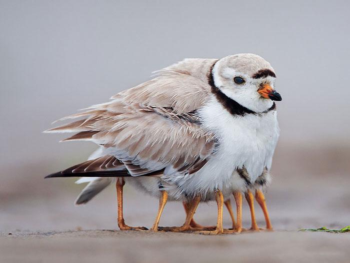 cute-bird-parents-22__700 (1)