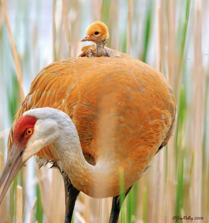 cute-bird-parents-25__700