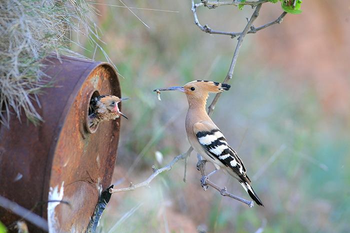 cute-bird-parents-261__700