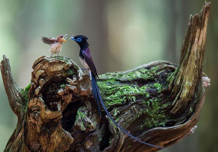 cute-bird-parents-36__700 (1)