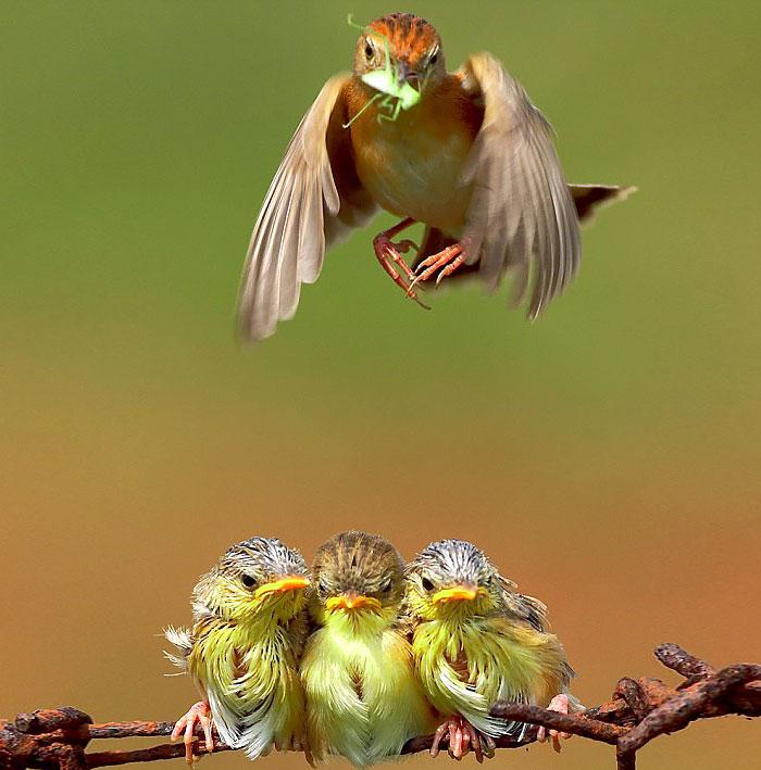 cute-bird-parents-37__700