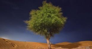 dunyaya-hosgeldiniz-hizlandirilmis-dunya-tanimi_135252-22310_640x360