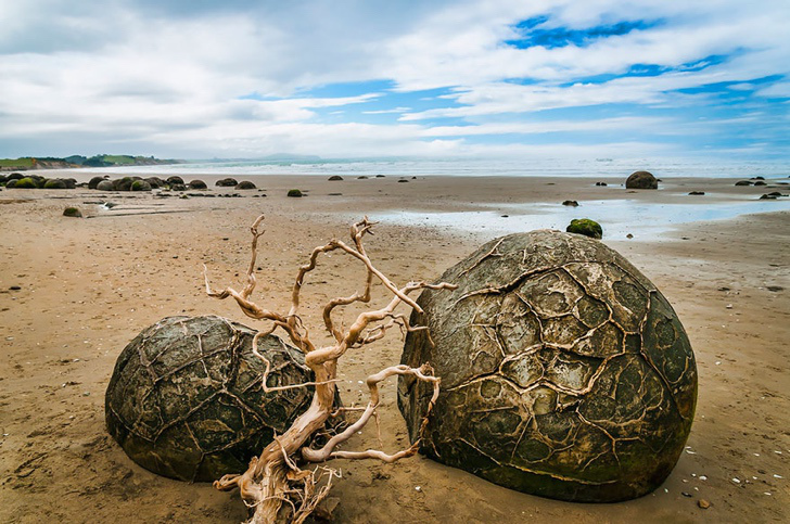 ejderha yumurtaları koekohe sahili yeni zelanda
