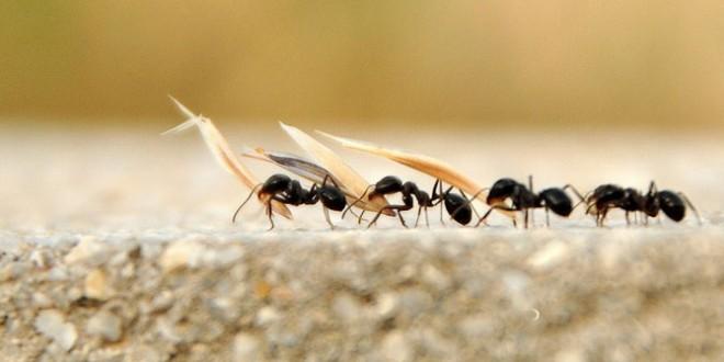 karınca_katarı1