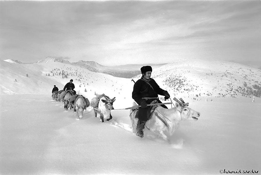 reindeer-people-hamid-sardar-afkhami-3
