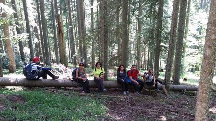 yenice_ormanları