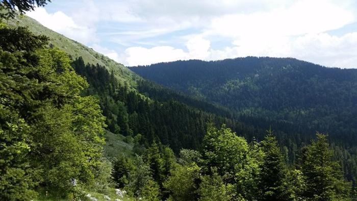 yenice_ormanları1