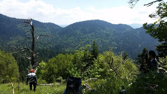 yenice_ormanları2
