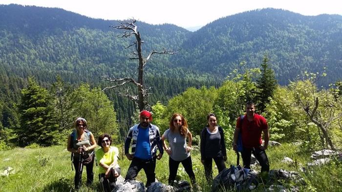 yenice_ormanları3