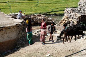 nepal_jumla_pirinç