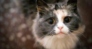 Hayvanları Korumak İçin Hayatınızdan Çıkarmanız Gereken 9 Madde